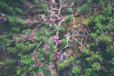 Photograph - Alpine Flowers by Kunal Mehra