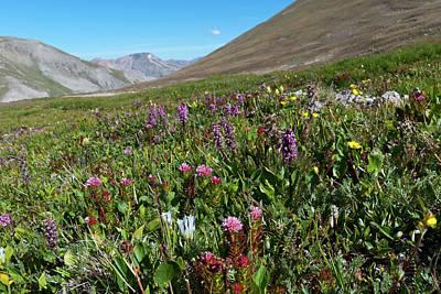Photograph - Alpine Garden Landscape by Cascade Colors
