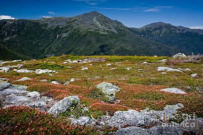 Photograph - Alpine Garden by Susan Cole Kelly