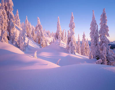 Photograph - Alpine Glow by Adam Gibbs