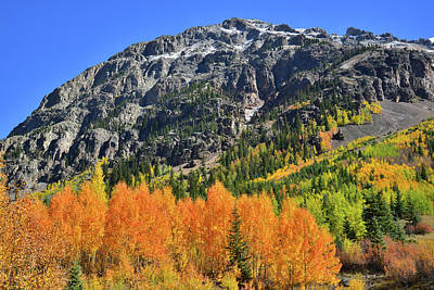 Print featuring the photograph Alpine Loop Road Aspens by Ray Mathis