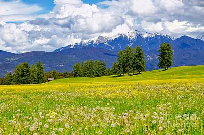 Photograph - Alpine Meadow On The Mieminger Plateau Tyrol by Elzbieta Fazel