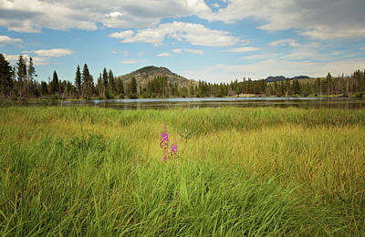 Photograph - Alpine Meadow by Sue Collura