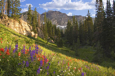 Photograph - Alpine Meadow by Douglas Pulsipher