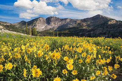 Photograph - Alpine Meadow With Wildflowers by Douglas Pulsipher