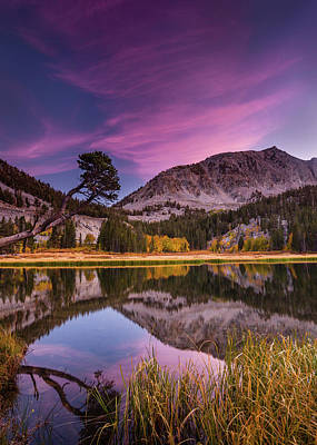 Alpine Reflection Art Print by Dan Holmes