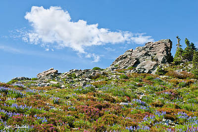 Photograph - Alpine Rock Garden by Jeff Goulden