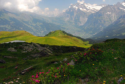 Alpine Roses In Foreground Art Print by Anne Keiser