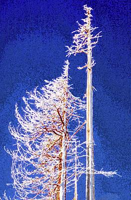 Digital Art - Alpine Snowy Trees  by Lyle Crump