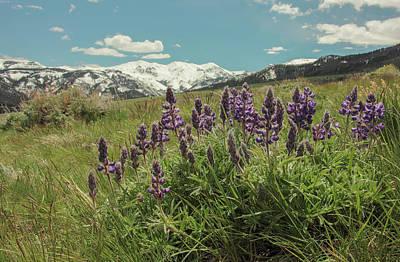 Photograph - Alpine Spring by Angelique Rea