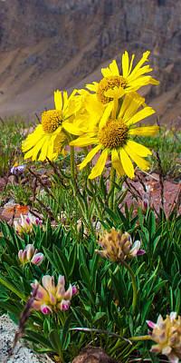 Photograph - Alpine Sunflower Vertical by Aaron Spong
