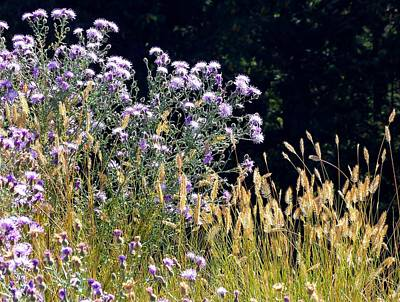 Kelowna Photograph - Alpine Thistles And Grasses by Will Borden