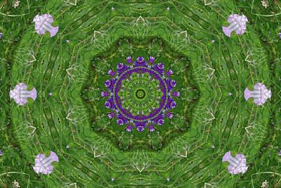Photograph - Alpine Vetch Primrose Kaleidoscope by Robyn Stacey