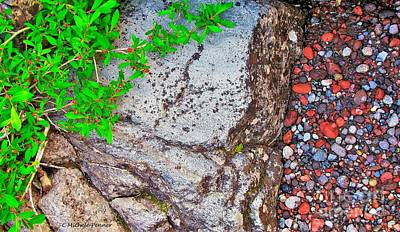 Photograph - Alpine Willow Over Volcanic Rock by Michele Penner