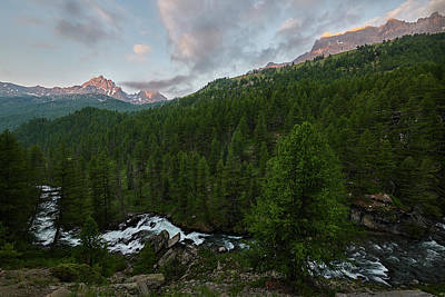 Photograph - Alps Forest by Jon Glaser