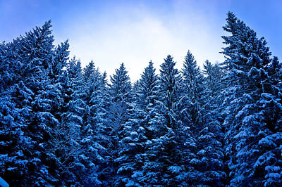 Photograph - Alps Pine Forest In Snow by Brch Photography