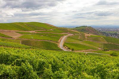 Alsatian Wall Art - Photograph - Alsatian Vineyards by W Chris Fooshee