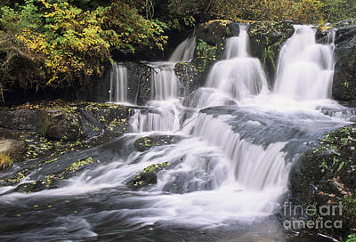 Photograph - Alsea Falls by Greg Vaughn - Printscapes