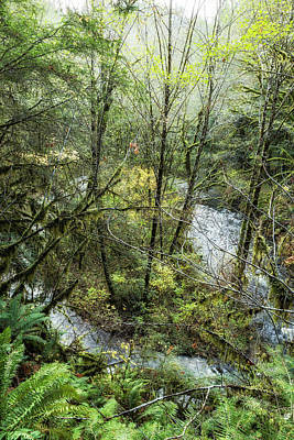 Photograph - Alsea River From Above by Belinda Greb