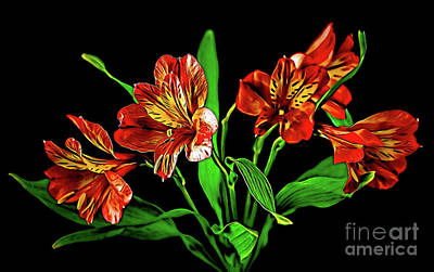 Photograph - Alstroemeria 18-23 by Ray Shrewsberry