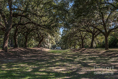 Photograph - Mcleod Alley Of Oaks by Dale Powell