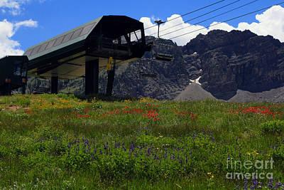 Ski-scape Photograph - Alta Wild Flowers by John Nichols