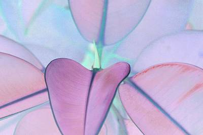 Photograph - Altered Flower -  105 by Andrew Hewett