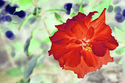 Photograph - Altered Flower -  132 by Andrew Hewett