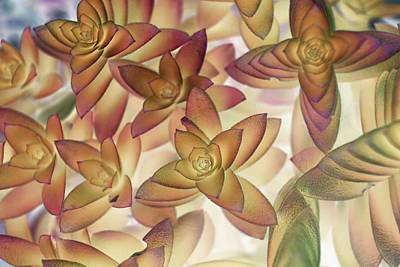 Photograph - Altered Flower -  154 by Andrew Hewett