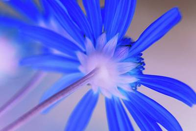 Photograph - Altered Flower -  94 by Andrew Hewett
