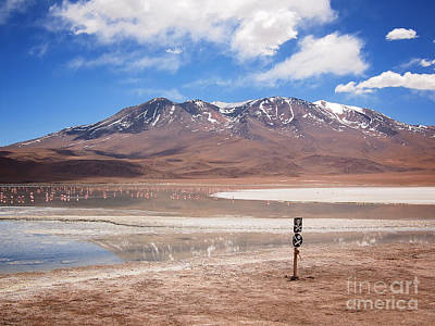 Photograph - Altiplano Landscape With Volcano And Flamingos by IPics Photography