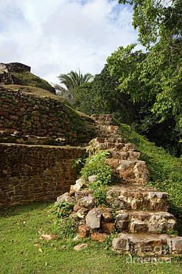 Photograph - Altun Ha Maya Ruins by Olga Hamilton