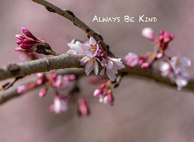 Photograph - Always Be Kind by Cathy Donohoue