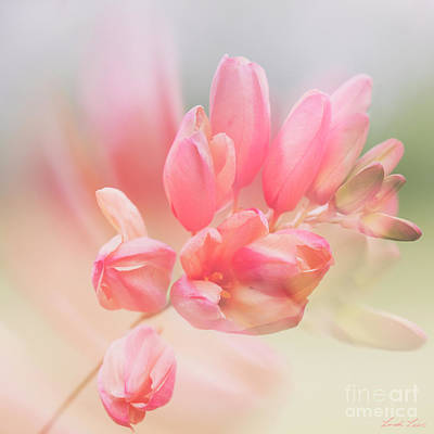 Photograph - Always Find A Reason To Smile by Linda Lees