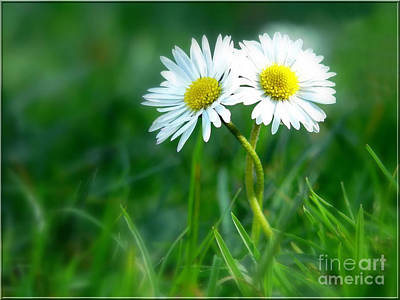 Daisies Digital Art - Always by Jacky Gerritsen