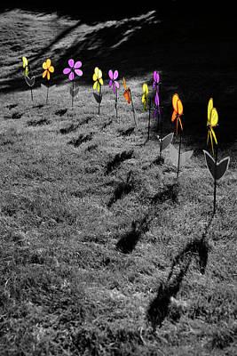 Photograph - Alzheimer's Awareness Flowers by Luke Moore
