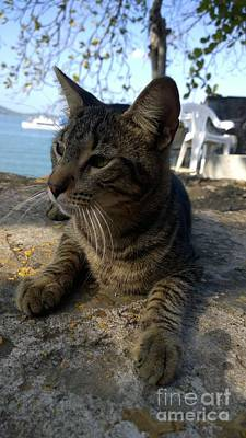Photograph - Amador The Cat Resting By The Ocean by Jennifer E Doll