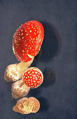 Amanita Art Print by Svetlana Sewell
