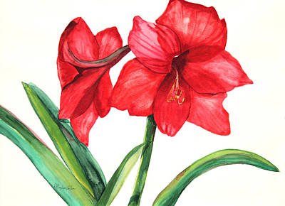 Amaryllis Watercolor Painting - Amarillis by Patricia Allingham Carlson