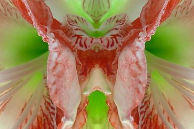 Photograph - Amaryllis Abstract by Patricia Strand