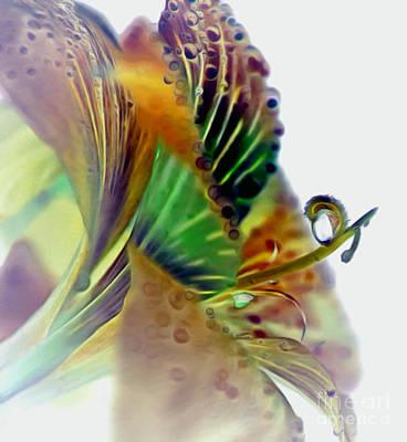 Amaryllis Photograph - Amaryllis Butterfly by Krissy Katsimbras