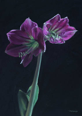 Pastel - Amaryllis by Christopher Reid