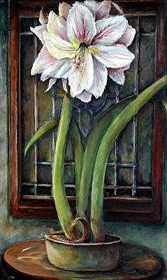 Amaryllis In The Window Original