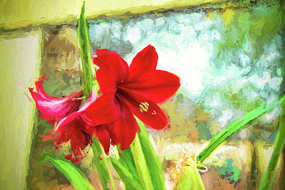 Photograph - Amaryllis On  The Porch by Kay Brewer