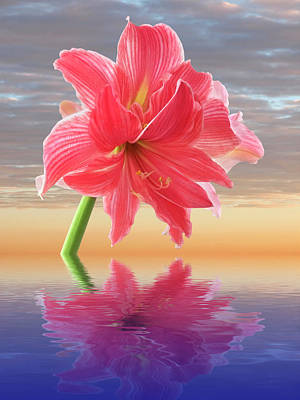 Photograph - Amaryllis Reflections by Gill Billington