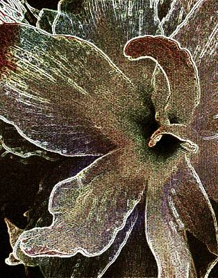 Muted Drawing - Amaryllis Shy by Amanda Schambon