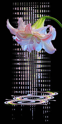 Photograph - Amaryllis Symphony by Gill Billington