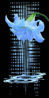 Photograph - Amaryllis Symphony In Blue by Gill Billington