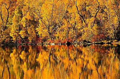Photograph - Amazing Autumn by Sean Sarsfield