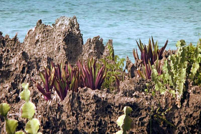 Mixed Media - Amazing Coral Reef Vegitation Plants That Can Live During High Tides As Well As Prolonged Low Time S by Navin Joshi